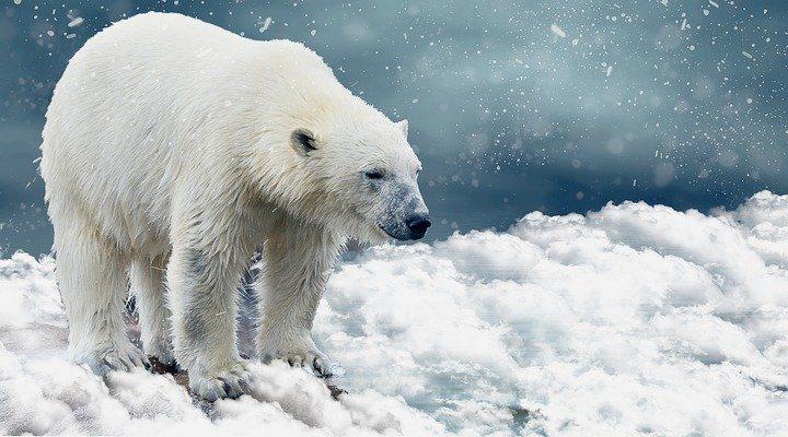 No!vember – Nein zum Klimawandel